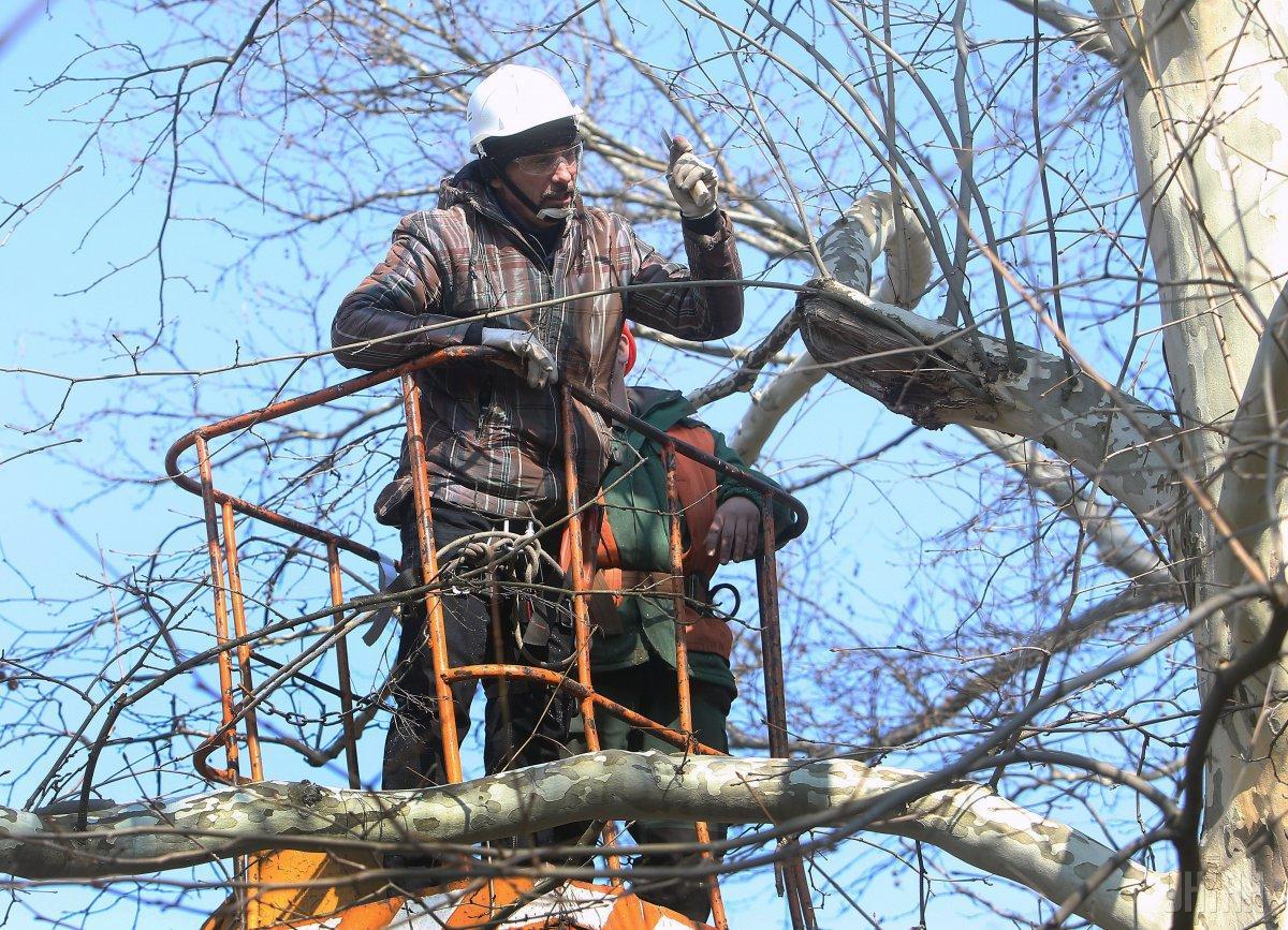 Как производить весеннюю обрезку деревьев