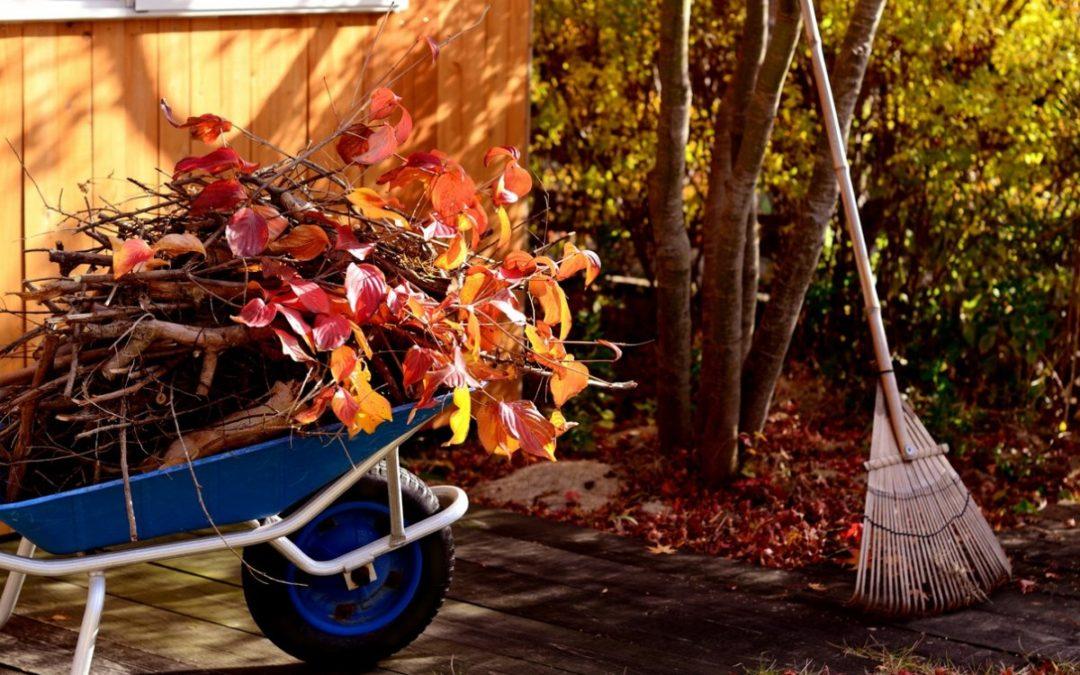 Как подготовить свой сад к зиме