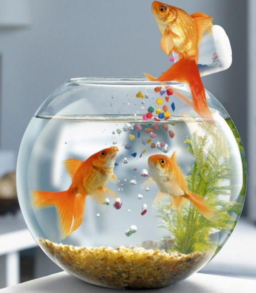 Силикон для аквариумов