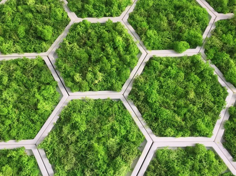 Стабилизированный мох - интересное дизайнерское решение